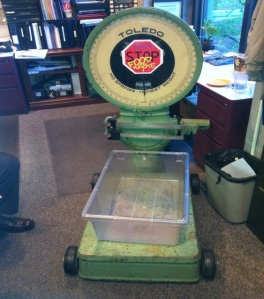 Scale to weigh food waste